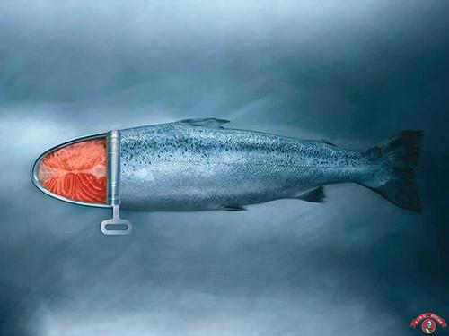 poisson.jpg